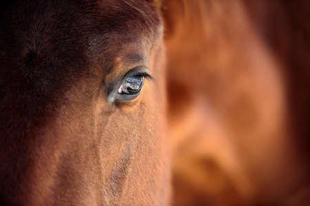 Eye of Arabian bai Banque d'images - 36889134