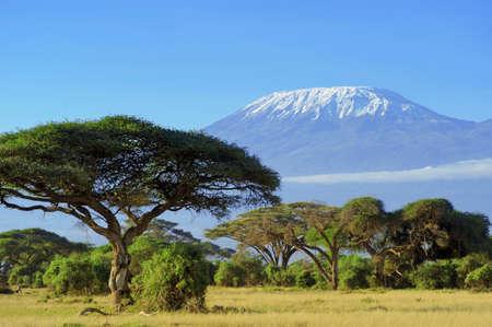 the national flag of kenya: Nieve en la cima del Monte Kilimanjaro en Amboseli