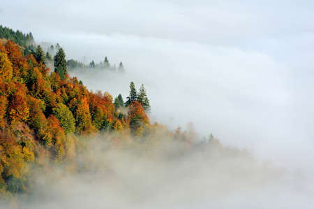 beautiful scenery: Autumn scene with mountains in fog on background