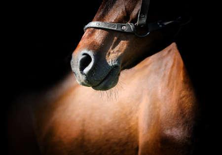 黒い背景に分離したクローズ アップの美しい馬の頭 写真素材
