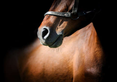 Close-up beautiful horse head isolated on black background Imagens