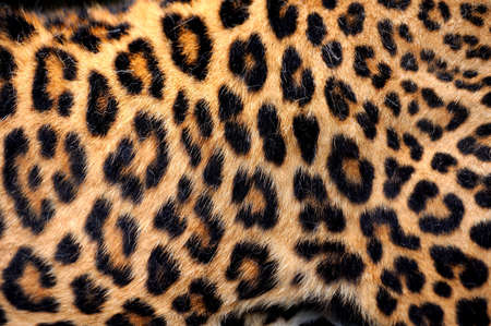 Leopard skin texture for background Banco de Imagens - 36891023