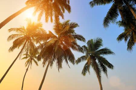 arboles frutales: Hermosa puesta de sol tropical con palmeras en la playa Foto de archivo