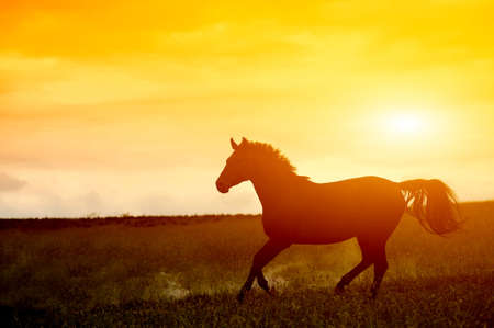 person silhouette: Horse in sunset Stock Photo