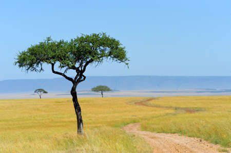 Savannah landscape in the national park in kenya photo