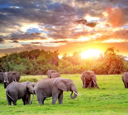Elephant in the wild - national park Kenya photo