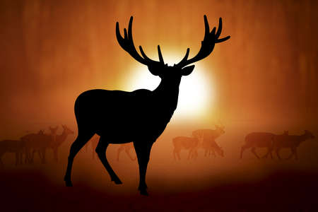 whitetail deer: Silhouettes deer against the sunset in meadow