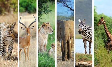 travel collage: Collage with photo african animals