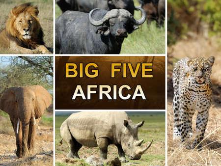 big five: The Big Five - Leone, Elefante, Leopardo, Bufallo e Rhinoceros Archivio Fotografico