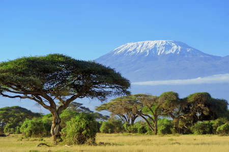 beautiful scenery: Snow on top of Mount Kilimanjaro in Amboseli