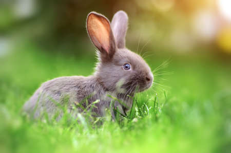 bunny rabbit: Little rabbit on green grass in summer day