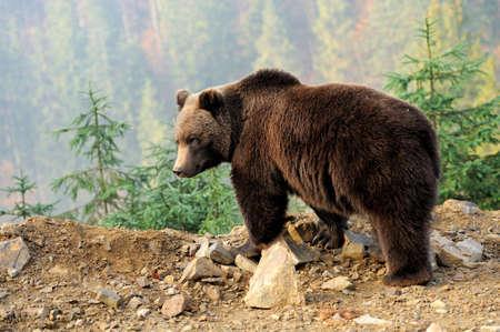 grizzly: Gardez en forêt