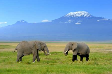 国立保護区でキリマンジャロ山の背景の上の象