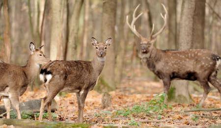 doe: Young doe deer in forest