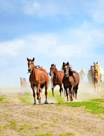 chestnut male: Horses