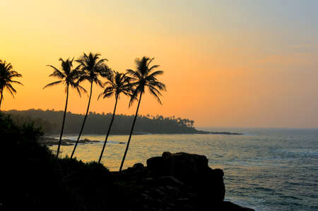 Beautiful tropical sunset with palm trees at beach photo