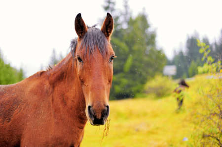 trakehner: Horse in the autumn background Stock Photo