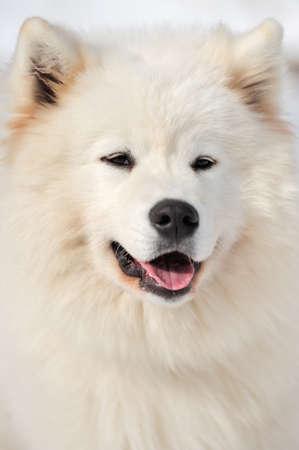 perro furioso: Retrato del perro. Retrato hermoso laika
