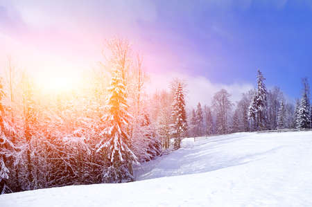 and in winter: Beautiful winter landscape with snow covered trees Stock Photo