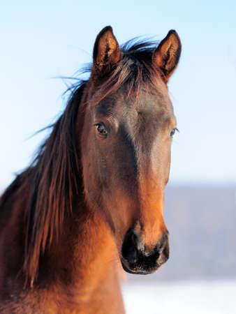 Close-up paard portret op de hemel achtergrond