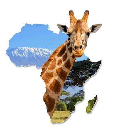 africa  wildlife: Africa Wildlife Map Design with geraffe and kilimanjaro - Isolated on White Stock Photo