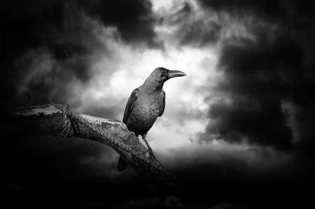 Raaf op een dorre tak met de maan verborgen achter de wolken en het verstrekken van verlichting