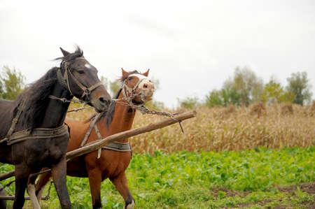 contemporaneous: Horse Stock Photo
