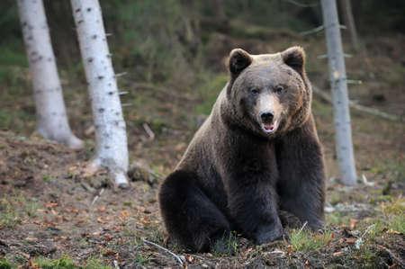 wet bear: Bear in forest
