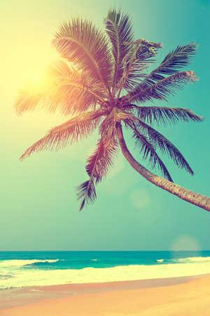 playas tropicales: Playa tropical con palmeras en Sri Lanka