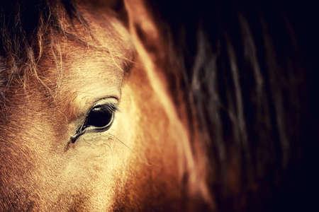 Close-up eye of Arabian bay horse on dark photo