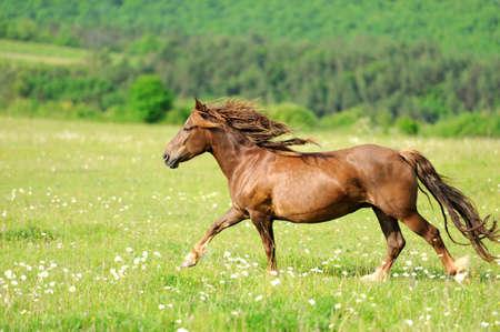 Koń Zdjęcie Seryjne