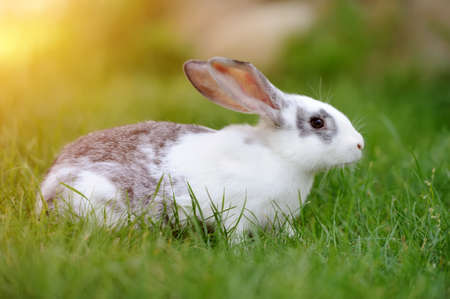 Little rabbit on green grass in summer day photo