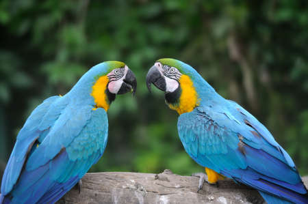 Parrot bird (Severe Macaw) sitting on the branch photo