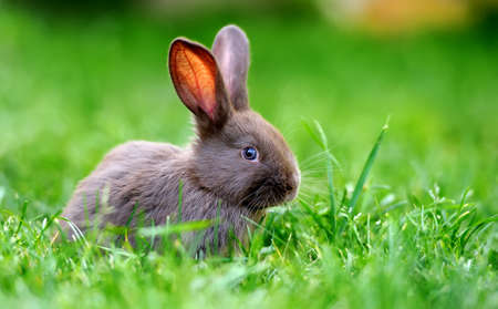 rabbits: Little rabbit on green grass in summer day