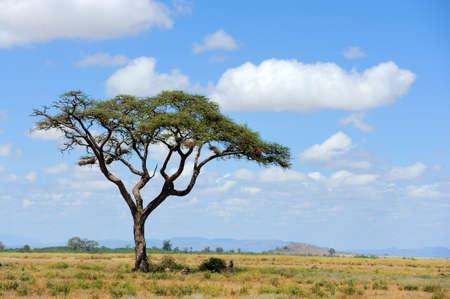 Savannah landscape in the national park in kenya