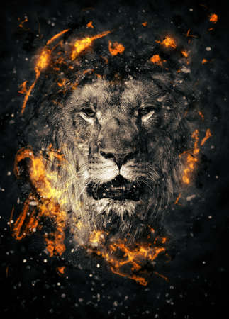 dangerous lion: Lion portrait in fire on black background