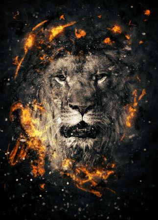 Retrato do leão no incêndio no fundo preto