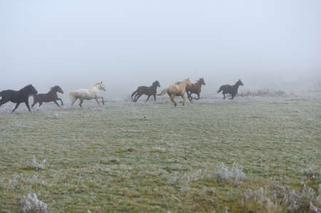 beast ranch: Horse running on fog field