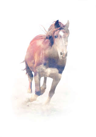 synchronously: Horse running on white background. Double exposure Stock Photo