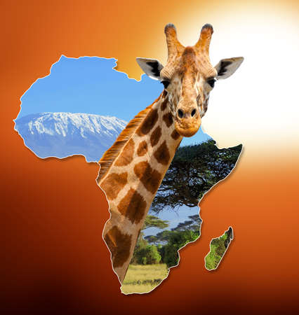 africa  wildlife: Africa Wildlife Map Design with geraffe and kilimanjaro