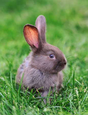 conejo: Pequeño conejo en la hierba verde en día de verano