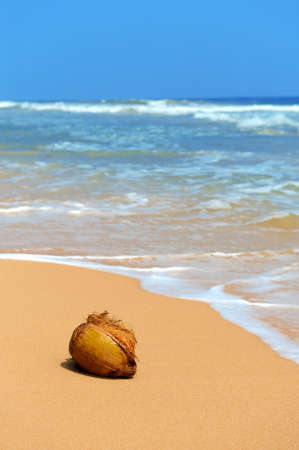 Nobody coconut on tropical beach ocean photo