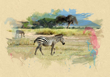 Zebra on textured paper. The effect of the paint brush photo