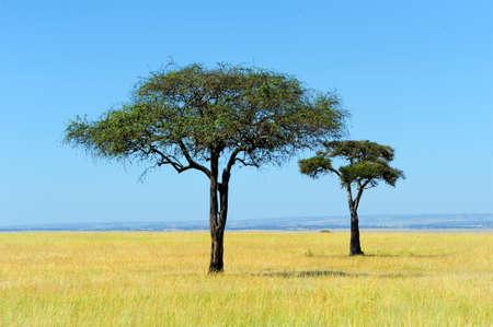 ケニアの国立公園でサバンナの風景 写真素材