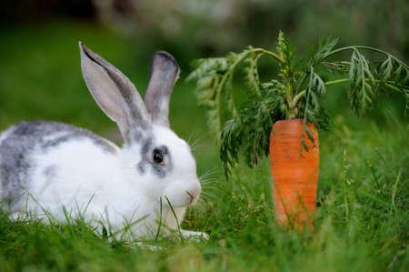 munch: Baby rabbit in grass. Summer day