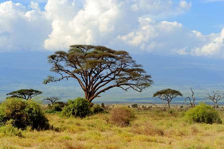 케냐에서 국립 공원에서 사바나 프리