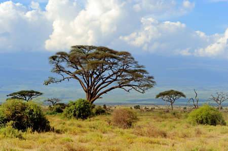 beautiful scenery: Savannah landscape in the national park in kenya