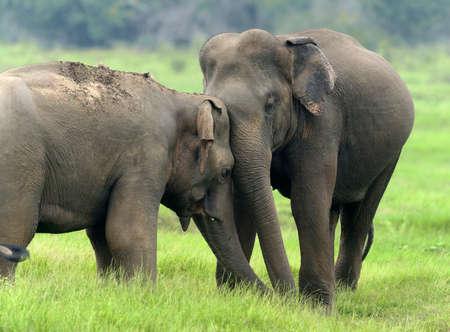 국립 공원, 스리랑카에서 코끼리
