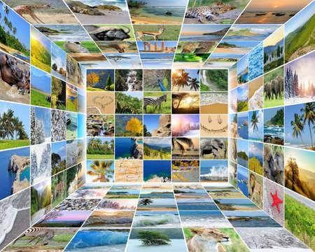 Nature photo (animal, landscape, beach). Collage background