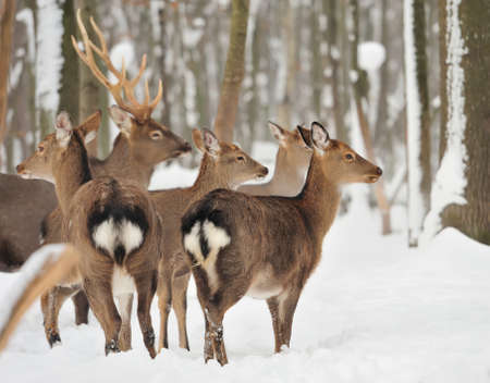 wild life: Young deer in winter forest